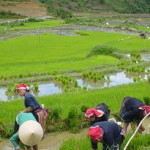 Sapa easy trekking tour